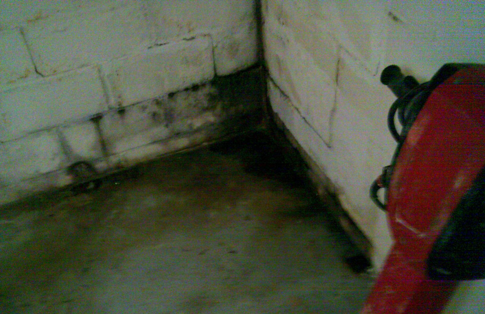 Mold growth is evident likely because of the basements consistent dampness due to repeated flooding.