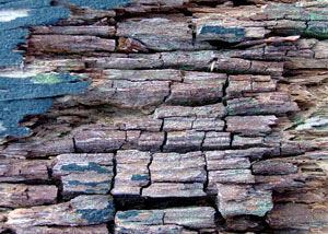 dry rot wood damage