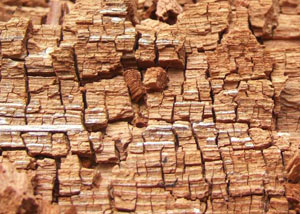 wood-damage-dry-rot
