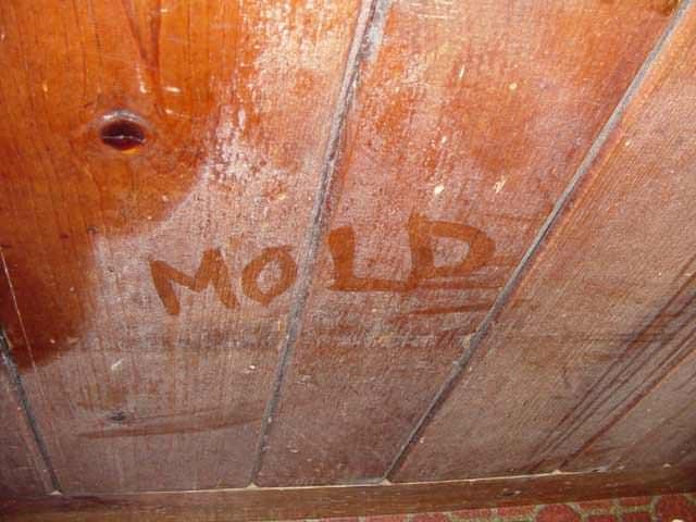 05lg-mold-wood-rot