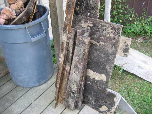 06lg-rotting-moldy-wood