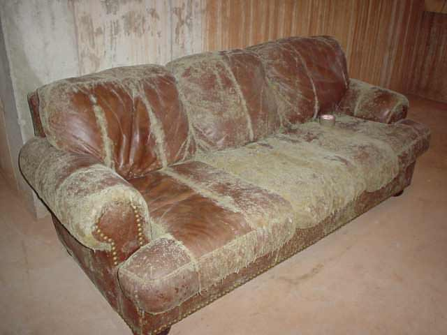 07lg-moldy-basement-furniture
